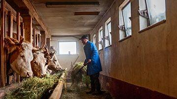 bodenbeschichtungen fuer die landwirtschaft an futtertischen